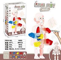 Детская развивающая и обучающая игрушка Модель тела человека Human Body Model