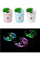 Увлажнитель и ароматизатор воздуха - ночник Succulent Humidifier
