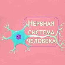 Заболевание нервной системы симптомы и лечение