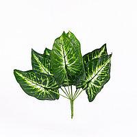 Сингониум (Pixie) темно-зеленый, белая сердцевина 30см.