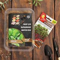 Набор для выращивания на балконе микрозелени Свекла
