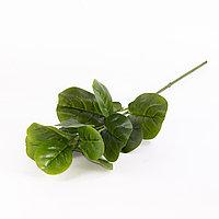 Фикус Лирата (зеленый), 70см.