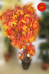 Дерево искусственное, ясень, 200 см