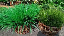 Трава декоративная искусственная под кашпо 34 - 44 см (1 пучок)