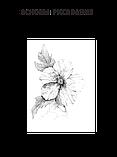 Основы рисования, фото 3
