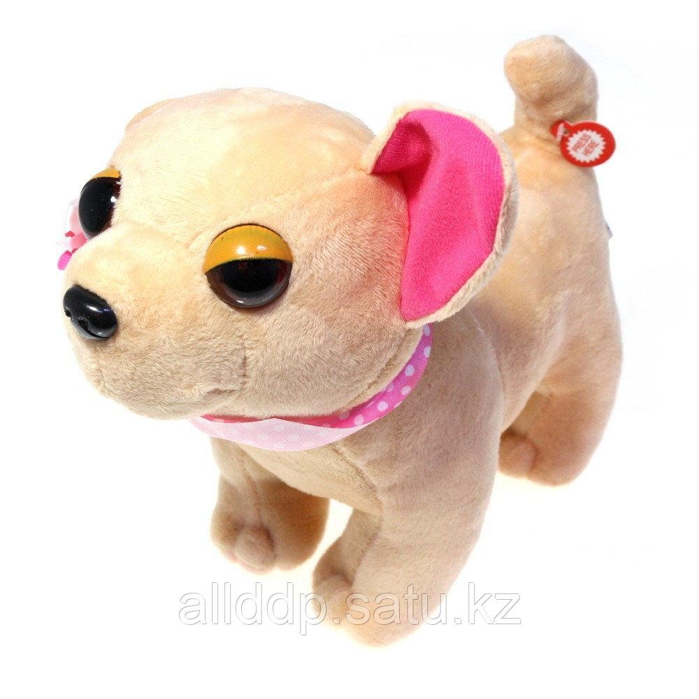 Собачка в сумочке Chi Chi Love (Чичилав) - чихуахуа с цветным ошейником, розовая сумка - фото 2