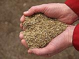 Семена Газонных трав  Газонная смесь PLAYGROUND (мешок - 20 кг), фото 2