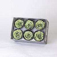 Роза Стандарт (зеленый чай);6 бутонов