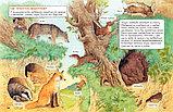Ренне: Удивительный мир животных. Энциклопедия для малышей, фото 4