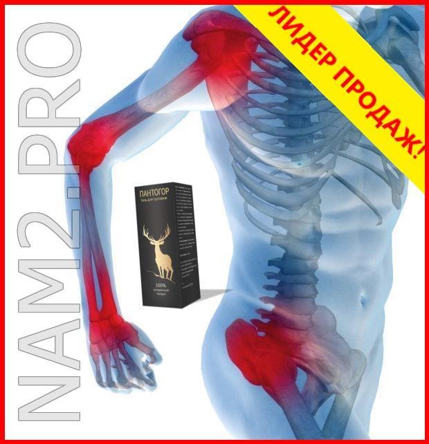 Пантогор, мощный гель для суставов - фото 3