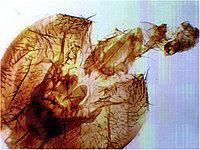 История девятая. Голова мухи