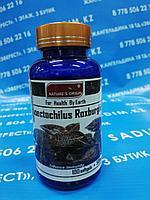 Капсулы - Anoectochilus Roxburghii ( Анектохил )