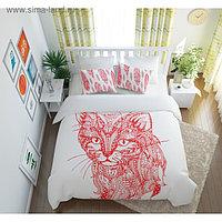 КПБ «Волшебный кот» евро, размер 220 × 240 см, 200 × 220 см, 50 × 70 см - 2 шт.