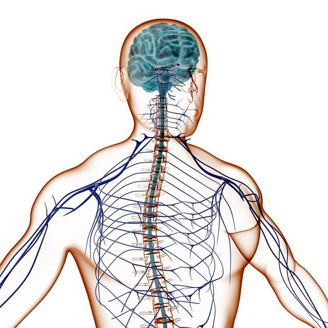 лечение нервной системы