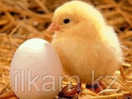Бытовой инкубатор «Несушка» на 104 яйца. С вентилятором, фото 2