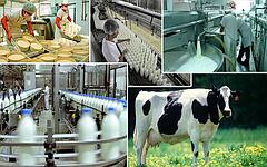 Молочная промышленность: оборудование для переработки молока и производства молочных продуктов.