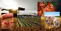 Оборудование для агропромышленного комплекса
