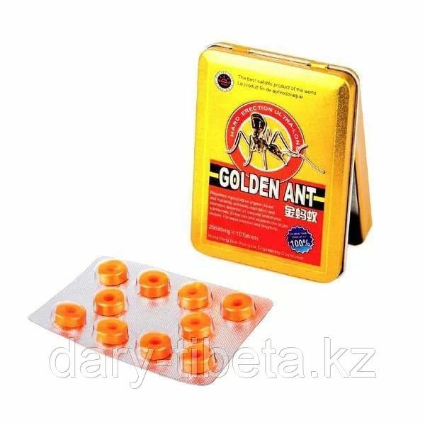 Golden Ant