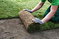 Укладка газона, озеленение, поливная система