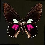 Ночная бабочка, лучший возбудитель для женщин, 4 шт, фото 5