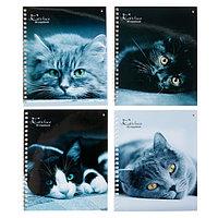 Тетрадь А5+, 80 листов клетка на гребне «Кошки», обложка мелованный картон, МИКС
