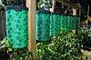 Плантатор для овощей ТОПСИ (TOPSY TURVY) Летняя распродажа!, фото 4