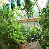 Плантатор для овощей ТОПСИ (TOPSY TURVY) Летняя распродажа!, фото 5