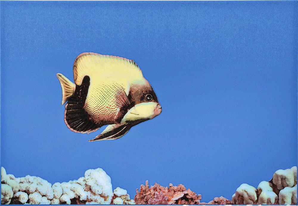 Декор Monocolor 1 Fish 275x400 D2