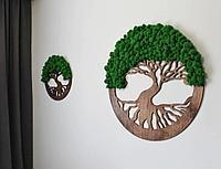 Дерево со стабилизированным мхом