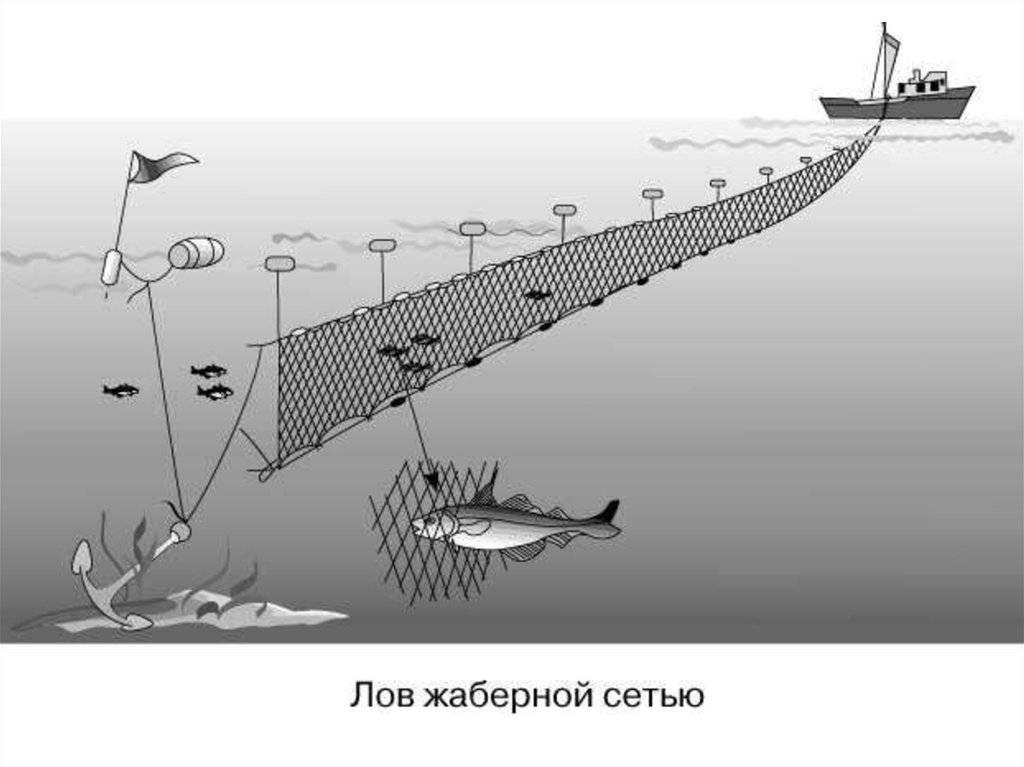 Бредень (невод) 30 метровая - фото 7