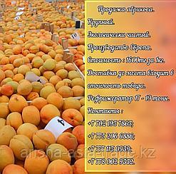 Свежие фрукты абрикосы Сербия