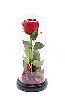 Роза в колбе «27см»