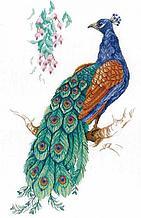 Набор для вышивания крестиком на канве НВ-536 «Птица счастья».