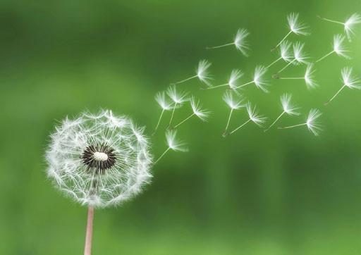 Экологичные смазочные и технологические материалы BECHEM
