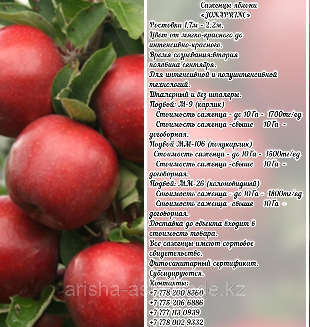 "Саженцы яблони ""Jonaprinc"" (Джонапринц) М 9 Сербия"