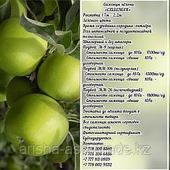 "Саженцы яблони ""Callenger"" ММ 106 Сербия"