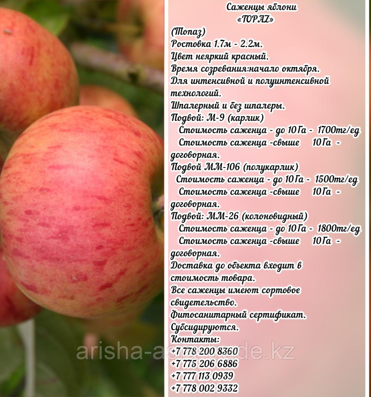 "Саженцы яблони ""Topaz"" (Топаз) М 9 Сербия"
