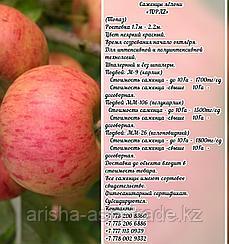 "Саженцы яблони ""Topaz"" ММ 26 Сербия"