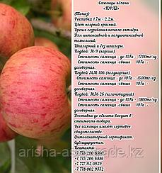 "Саженцы яблони ""Topaz"" ММ 106 Сербия"