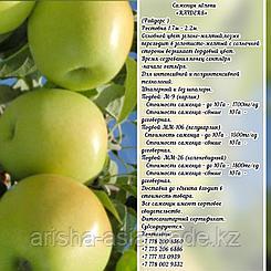 """Саженцы яблони """"Raiders"""" ММ 106 Сербия"""