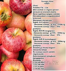 """Саженцы яблони """"Gala"""" ММ 106 Сербия"""
