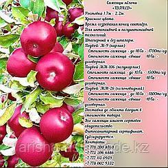 """Саженцы яблони """"Idared"""" ММ 106 Сербия"""