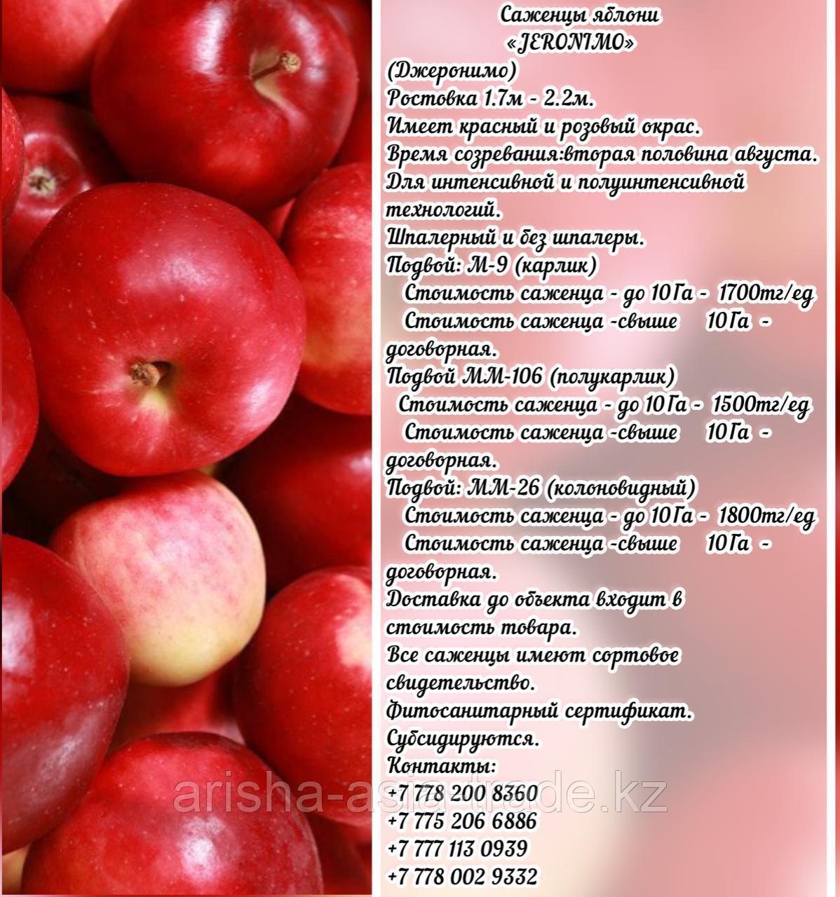 "Саженцы яблони ""Jeromino"" (Джеромини) М 9 Сербия"