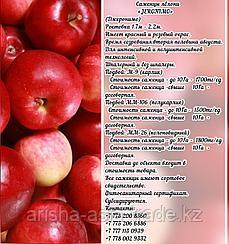 """Саженцы яблони """"Jeromino"""" ММ 26 Сербия"""