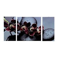 Картина модульная на стекле 'Черная Орхидея' 2-25*50, 1-50*50 см, 100*50 см