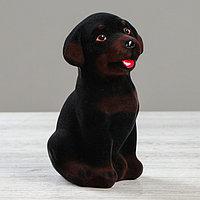 Копилка 'Ротвейлер', флок, коричневый, чёрный цвет, 18 см