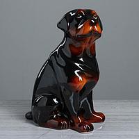Копилка 'Собака ротвейлер', чёрный цвет, 35 см