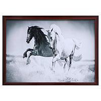 Картина 'Пара лошадей' 56х76см рамка МИКС