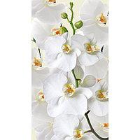 Картина на подрамнике 'Белая орхидея' 50*100 см