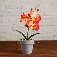 Композиция в горшочке 'Орхидея' 7х23 см, микс